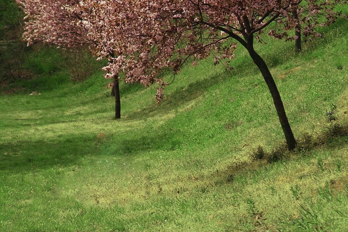 primavera-1459971