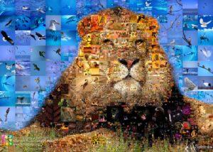 Artensoft Photo Collage Maker Pro , serwis komputerowy wrocław
